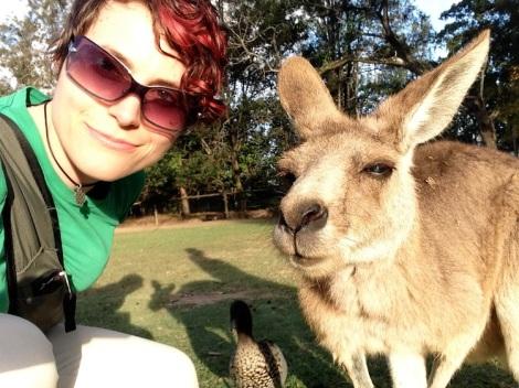 Kangaroo, lone pine koala sanctuary, brisbane, australia, Michelle Lunicke