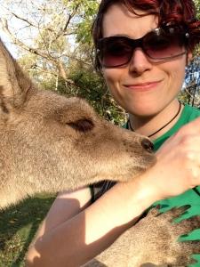 kangaroo, lone pine koala sanctuary, brisbane, Michelle Lunicke