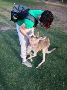 kangaroo, Michelle Lunicke, Lone Pine Koala Sanctuary, Australia